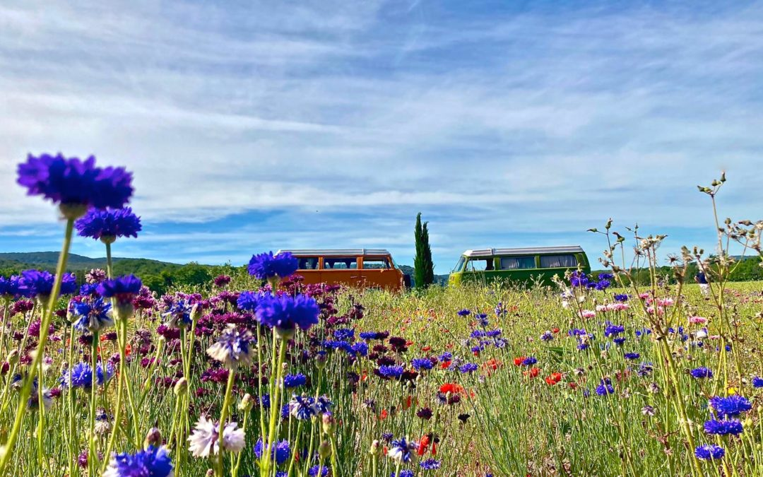 Des vacances inoubliables en Combi Volkswagen Vintage Camper Ardèche